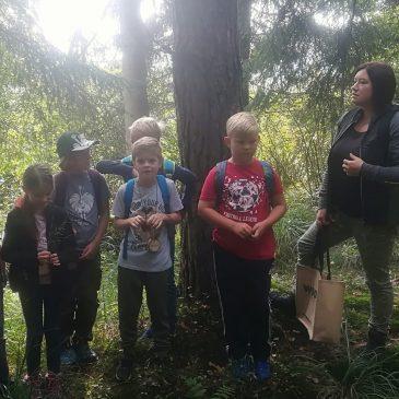 Ein besonderer Tag im Wald   Poseben dan v gozdu